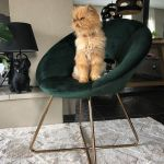 Fauteuil Coco-100722936